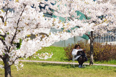 Woman reading magazine in blooming garden. Vilnius, Lithuania - May 02, 2016: Middle age woman sitting under blooming cherry tree reading magazine in Vilnius Stock Photography