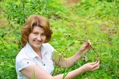 Woman reaps a crop of blackberries in the garden Stock Image