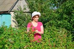 Woman reaps a crop of raspberries in the garden Stock Photo