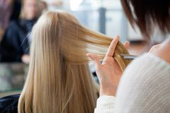 Woman Receiving Haircut Stock Photo