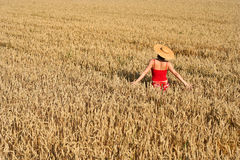 Woman in red. In a golden field royalty free stock image