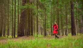Woman in red coat in woods royalty free stock photography