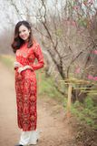 Woman in Red Crew-neck Long-sleeved Dress Near Bare Tree stock images