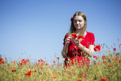 Woman at red dress collect poppy blossoms Royalty Free Stock Images