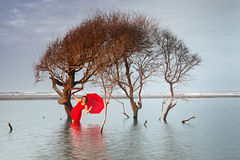 Woman in Red Dress Red Umbrella in Water Stock Image