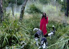 Woman in red dress with tree wolfs in forest Royalty Free Stock Image