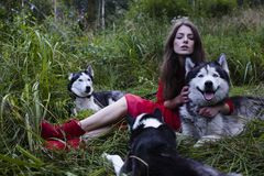 Woman in red dress with tree wolfs, forest, husky Stock Photos