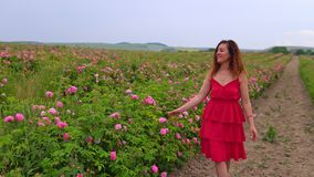 Woman in red dress walks in the blossoming rose garden stock video
