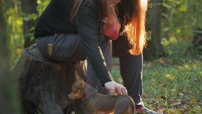 Woman with red hair sitting in a forest on a stump and caresses two little dogs. A woman with red hair sits in the woods on a stump in the sun and caresses two stock video