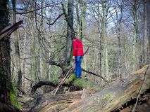 Woman with red jacket on a tree trunk at woodland royalty free stock photography