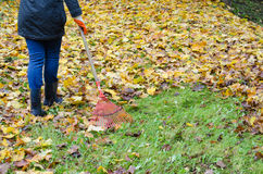 Woman red rake tool hand garden work leaves autumn Stock Image