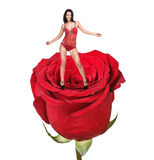 Woman on red rose Stock Image