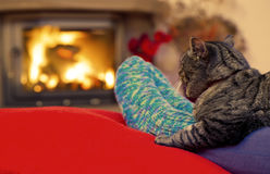 Woman relaxes by warm fire and gray cat . Feet in wool socks by the fireplace. Woman relaxes by warm fire and warming her feet in wool sock. Female legs in Stock Photo
