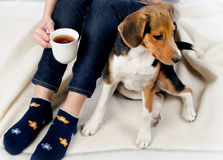 Woman relaxing with beagle puppy and tea Stock Images