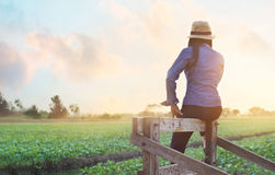 Woman relaxing and enjoying kale field view agricultural  landscape in sunset Royalty Free Stock Photos