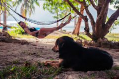Woman relaxing in hammock with dog Stock Photography