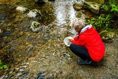 Woman releasing Chum fry into Kanaka Creek royalty free stock photos