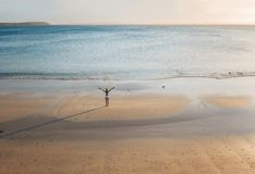 Female stands on a secluded beach at sunset stock photo