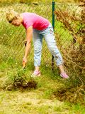Woman remove tree from backyard, digging soil with shovel Royalty Free Stock Photos