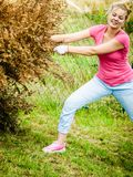 Woman removing dried thuja tree from backyard stock photos