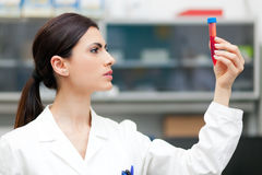 Woman researcher doing a blood test Stock Images