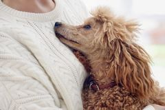 Woman is resting with a dog at home . Royalty Free Stock Photos