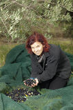 Woman resting after gathering olives Royalty Free Stock Images