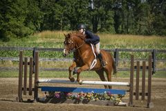 Woman and chestnut gelding over plank jump. Woman rides a chestnut gelding over a plank jump at a show Royalty Free Stock Image