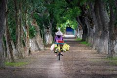 Woman riding on bicycle. AN GIANG, VIETNAM: the woman riding on bicycle to sell vegetables in An Giang province, Vietnam stock images