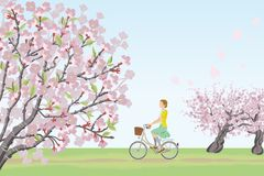 Woman riding bicycle in spring nature Royalty Free Stock Photo