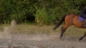 Woman riding horse by gallop at sunset. Horseback riding in slow motion. Horseman gradually disappears from the frame