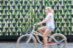 Woman riding bycicle by green urban vertical garden wall. Stock Photos