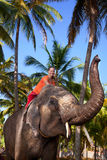 Woman riding elephant. Young beautiful woman riding on big elephant with trunk up in palm forest. India, Kerala royalty free stock photography