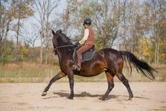 Woman Riding Horse. In an Outdoor Arena Stock Photos