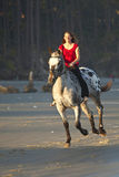 Woman riding horse on the beach Stock Photos