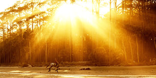 Woman riding horse on beach. At sunset, sunbeams coming through trees Royalty Free Stock Photography