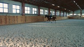 Woman riding horse fast on arena. View of woman training with horse while riding fast on sandy spacious arena under roof stock footage