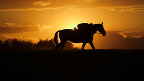 Woman riding horse on field during sunset
