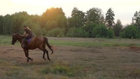 Woman riding horse by gallop at sunset. Horseback riding