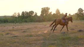 Woman riding horse by gallop at sunset