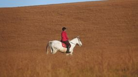 Woman riding a horse strokes and hugs a in the field. Slow motion. Side view. Woman riding a horse strokes and hugs a horse standing in the field. Slow motion stock video