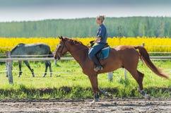 Woman riding a horse Royalty Free Stock Photos