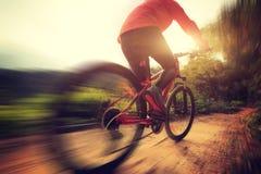 Woman riding mountain bike on forest trail Stock Photo