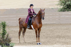 Woman riding Saddlebred horse. In English livery stock photography