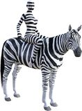 Woman Riding Zebra, Stripes, Isolated Royalty Free Stock Image