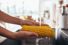 Woman rinsing fresh corns by hands in the kitchen-sink. Going to prepare salad. Woman rinsing fresh corns by hands in the kitchen-sink. Going to prepare salad Royalty Free Stock Photography