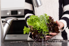 Woman rinsing lettuce. To prepare healthy dish Royalty Free Stock Photos