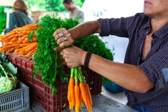 Lady holding carrots stock images