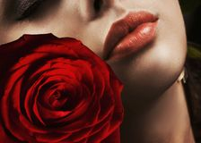 Woman with rose royalty free stock image