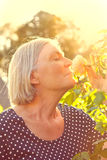 Woman rose scent orange light. Woman with grey hair in her garden enjoying the scent of a rose flower on the glorious golden light of a warm and sunny summer royalty free stock photos